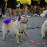 Pet Express Doggie Run 2012 Philippines. Jpg (276).JPG