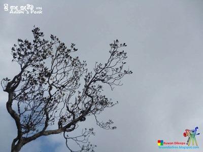 Adam's Peak 2014 by Ruwan Dileepa @ lessonforfree.blogspot (142)