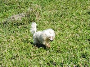 Dogs Trekking 6 (45)