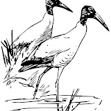 colouringbook_coloring_book_wood_ibis_1-569px.jpg