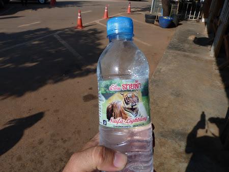 Templul tigrilor Thailanda - apa cu tigru
