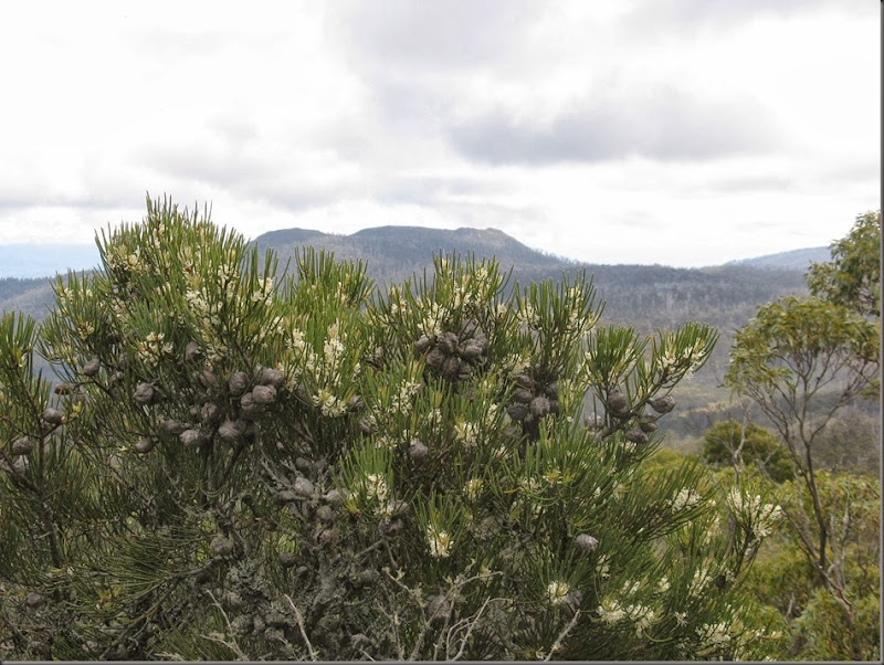 Hakea and Platform Peak on track to Dromedary summit