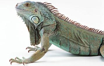 reptil2