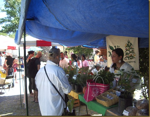 Organic Market 016
