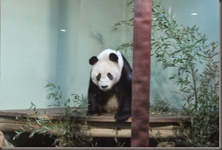 16_12_2014-10_28_06-6090Edinburgh Zoo