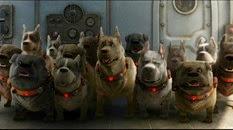 31 les chiens