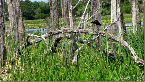OrlandoWetlands_124