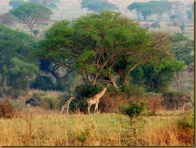 Ziwa, Murchison Falls trip 249