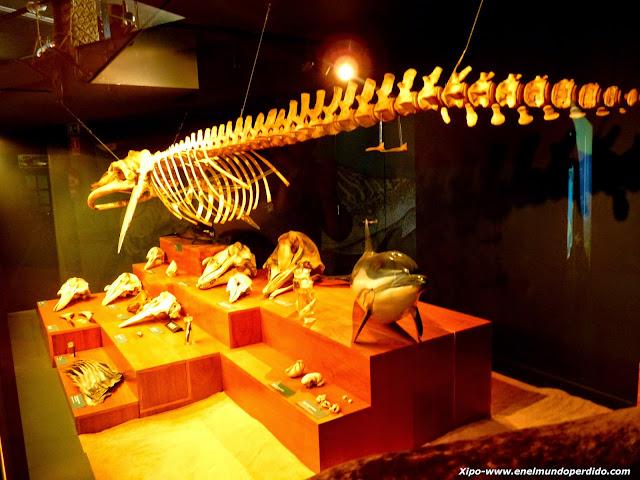 esqueletos-peces.JPG