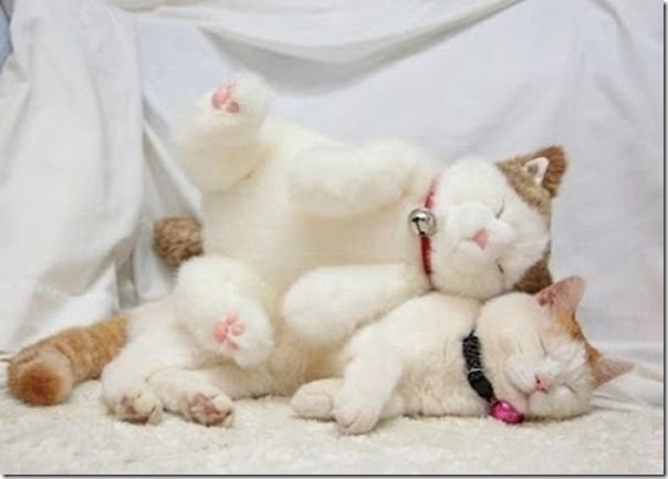 cats-stuffed-animals-21