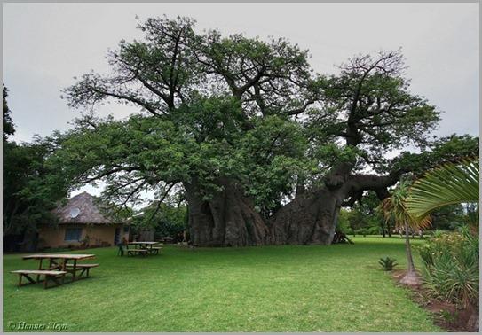 sunland-baobab-12 (1)
