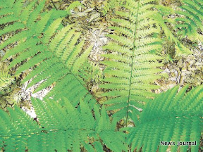 Fern closeup 3x.jpg