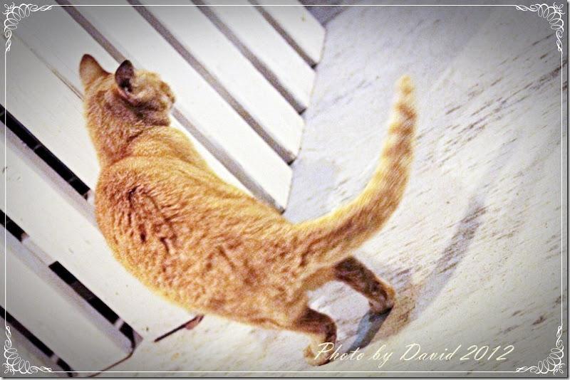 cat116