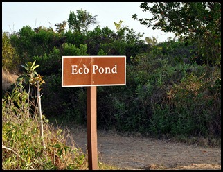 01 - Early Morning Eco Pond Sign