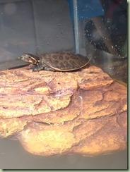turtle_spot