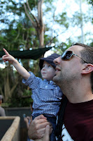 Pointing out the koalas