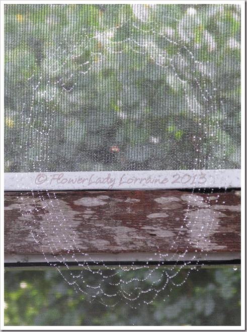 07-03-spiderweb