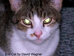 evil-cat-copy