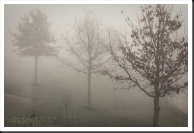 2012 11 21 IMG_7630w