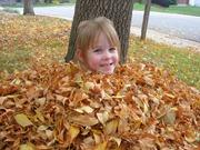 leaves (5)