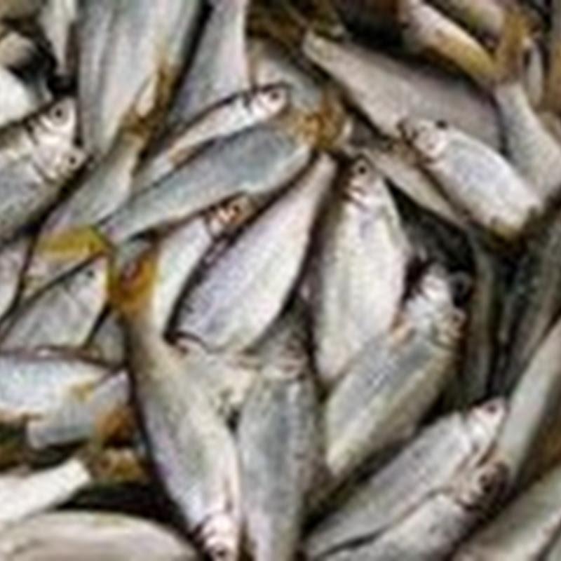Cara membuat Kecap Ikan