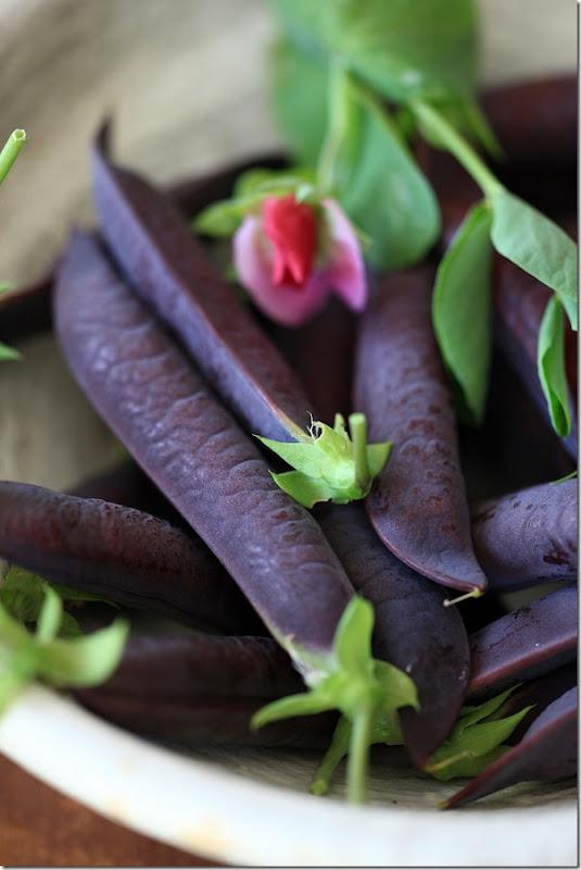 fioletowy groszek w sałatce z bobem, groszkiem zielonym, quinoa i ogórkirm kiszonym pod parmezanową chmurką (1)
