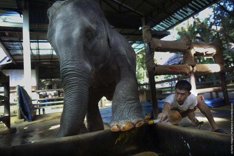 elephant-hospital-2