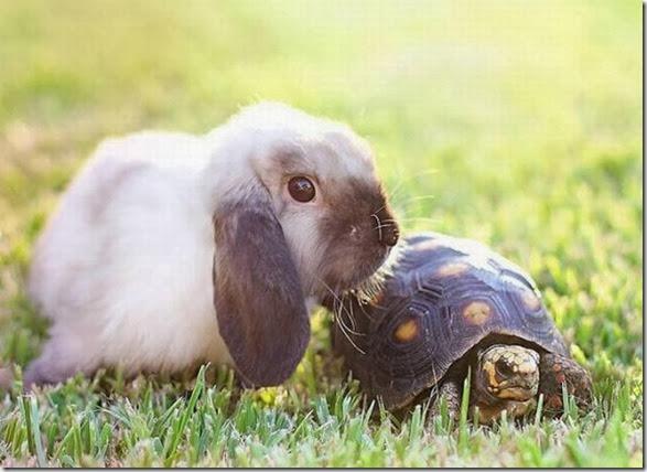 funny-animals-cute-20