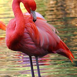 by Shrikrishna Bhat - Animals Birds