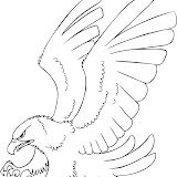 how-to-draw-a-cartoon-hawk-step-4.jpg