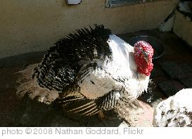 'Turkey' photo (c) 2008, Nathan Goddard - license: http://creativecommons.org/licenses/by-nd/2.0/