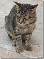 Alimentos prohibidos en gatos