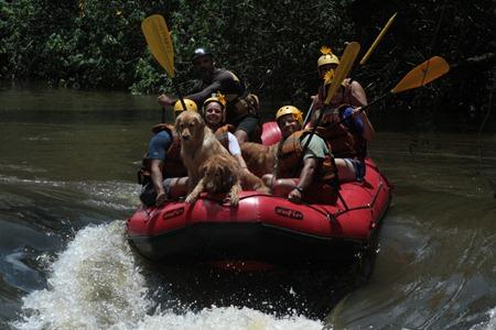Pets Adventure 8 (85)