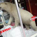 polarbear in nagoya in Nagoya, Aiti (Aichi) , Japan