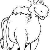 camello11.jpg