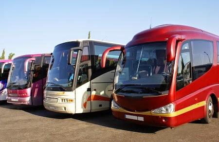 Autobuze in Europa.jpg