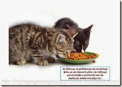 Τι ξέρω για τα ζώα(10)