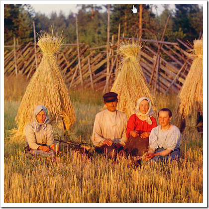 Harvest time in a Russian wheat field