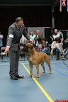 20130510-Bullmastiff-Worldcup-0759.jpg