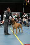20130510-Bullmastiff-Worldcup-0759.jpg