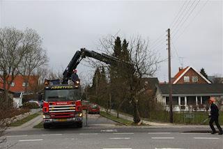 Træprojekt Buskevej
