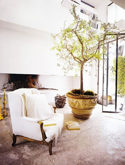 Träd inomhus, PAO