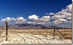 Sand Hill Cranes Wilcox AZ 045