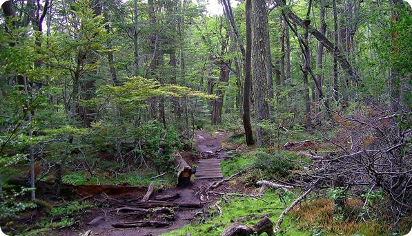Bosque durante a Senda Costera no Parque Nacional Tierra del Fuego