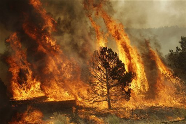 A forest burns during a backburn operation to fight the Wallow Fire in Nutrioso, Ariz., Friday, June 10, 2011. A massive wildfire in eastern Arizona that has claimed more than 30 homes and forced nearly than 10,000 people to evacuate is likely to spread into New Mexico soon, threatening more towns and possibly endangering two major power lines that bring electricity from Arizona to West Texas. Marcio Jose Sanchez / AP Photo