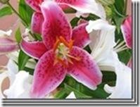 clip_image03752