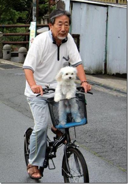 dog-mans-best-friend-34