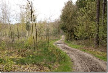 森の道は馬の道