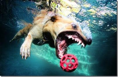 perros bajo el agua (8)