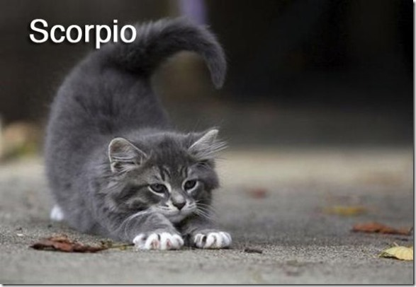 cats-signs-zodiac-10